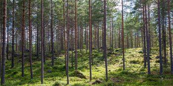 Möte, Sollerö gemensamhetsskog
