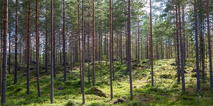 Sollerö Gemensamhetsskog
