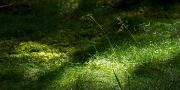 Ryssa-Gesunda Vvof: Årsmöte