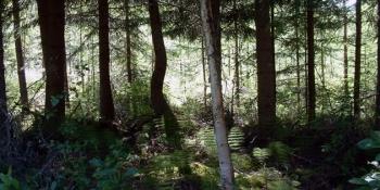 Björka VVO: Ordinarie jaktstämma