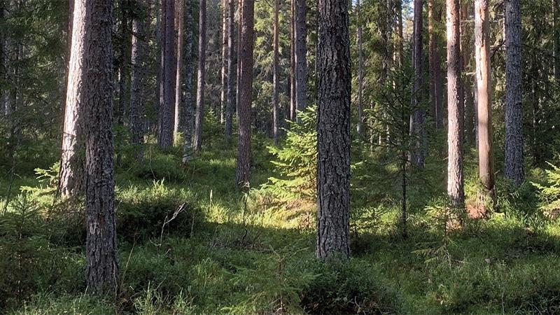 Föreningsstämma Sollerö Gemensamhetsskog